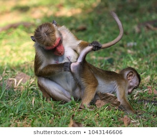 Name:  macaca-monkey-inspect-baby-ass-260nw-1043146606.jpg Views: 195 Size:  27.4 KB